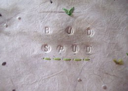 Bud Spud Bonsai Potato, Detail of Cover